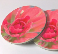 Indian Paintbrush Photo Sandstone Car Coasters, Sold as a pair, Wildflower Art