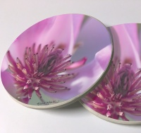 Saucer Magnolia Photo Sandstone Car Coasters, Sold as a pair, Floral Art