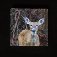 "Deer Chewing  6""  Tumbled Stone Trivet"