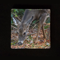 "Deer Grazing 6""  Tumbled Stone Trivet"