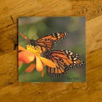 Monarch Butterflies on Zinnia Ceramic Drink Coaster  | Butterfly Coaster | Monarch Art