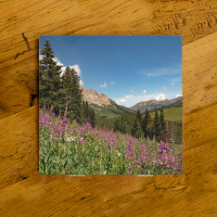 Colorado Mountains and Fireweed Ceramic Coaster | Colorado Drink Coaster | Colorado Home Decor