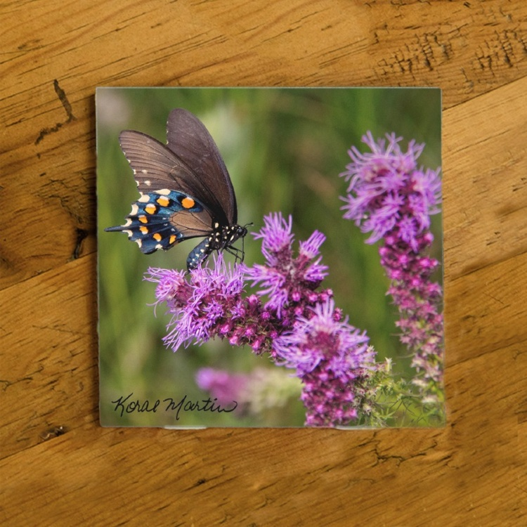 Swallowtail Butterfly on Liatris Photo Ceramic Drink Coaster