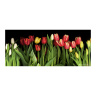 Red Yellow and White Tulips Photo Coffee Mug  Full Image