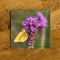 Sulfur Butterfly on Liatris Wildflower Ceramic Drink Coaster