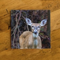 Deer Chewing Photo Ceramic Drink Coaster