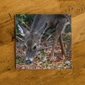 Deer Grazing Fine Art Photo Ceramic Coaster
