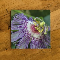 Purple Passion Flower Photo Ceramic Coaster