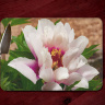 White and Pink Peony Tempered Glass Cutting Board 8x11 and 12x15