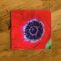 Red Anemone  Flower Photo Ceramic Coaster