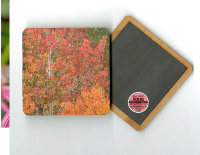 "Fall Aspen Leaves II Photo 4""x4"" Wood  Coaster Magnet on Back"