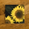 Sunflower Trio Photo Ceramic Drink Coaster