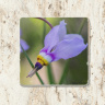 Shooting Star Wildflower Floral Photo Tumbled Stone Coaster