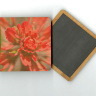 "Indian Paintbrush Wildflower Photo 4""x4"" Wood  Coaster with Magnet on Back"