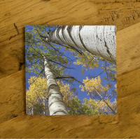 Aspen Reach to Sky Close Ceramic Drink Coaster