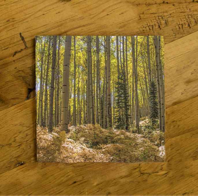 Fall Aspen and Fern Photo Ceramic Drink Coaster