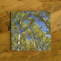 Fall Aspen and Sky Colorado Ceramic Drink Coaster