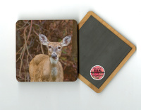 "Deer Chewing 4""x4"" Wood Coaster with Magnet on Back  with  Fine Art Photo by Koral Martin"