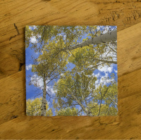 Aspen Reaching to Sky Ceramic Drink Coaster