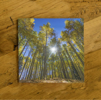 Aspen with Sun Starburst Ceramic Drink Coaster