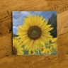 Sunflower Field Photo Ceramic Coaster by Koral Martin