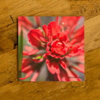 Red Indian Paintbrush Wildflower Ceramic Drink Coaster | Floral Coaster | Wildflowers