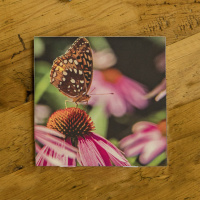 Butterfly on a Coneflower Photo Ceramic Coaster