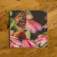Butterfly on Coneflowers Photo Ceramic Drink Coaster