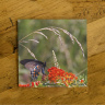 Swallowtail Butterfly on Milkweed Photo Ceramic Drink Coaster