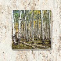 Fall Aspen Grove Kebler Pass Tumbled Stone Coaster