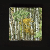 Fall Aspen Grove Colorado Tumbled Stone Drink Coaster