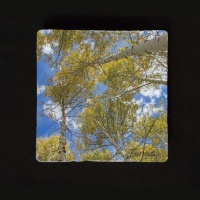 Fall Aspen Reaching to Sky Photo Tumbled Stone Coasters