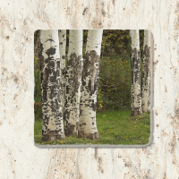 Aspen Tree Trunk Tumbled Stone Drink Coaster
