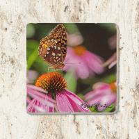 Butterfly on Coneflower Tumbled Stone Drink Coaster