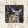 Deer Chewing Tumbled Stone Drink Coaster