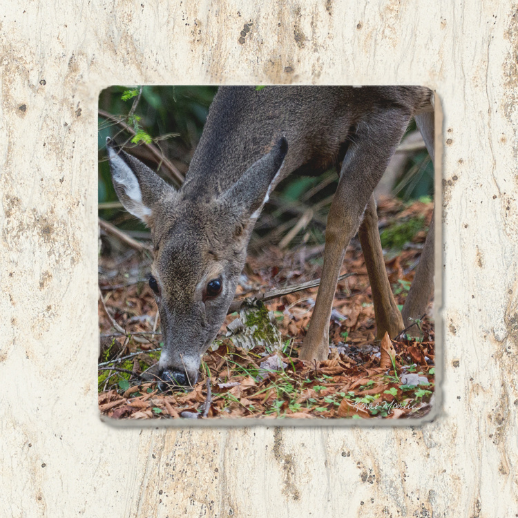 Deer Grazing Tumbled Stone Drink Coaster