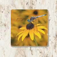 Dragonfly on Blackeyed Susan Tumbled Stone Drink Coaster