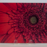 Red Gerber Gerbera Flower Fine Art Photo Tempered Glass Cutting Board, Hot Pad Trivet on Easel
