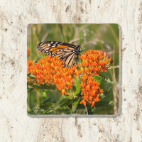 Monarch Butterfly on Milkweed Tumbled Stone Drink Coaster