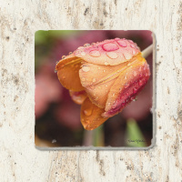 Pink & Peach Tulip with Waterdrops Tumbled Stone Drink Coaster