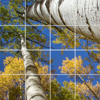 Aspen Reaching to the Sky Tile Square Mosaic