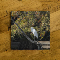 Egret on Dock Photo Ceramic Drink Coaster
