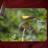Goldfinch II Photo on Tempered Glass Cutting Board 8x11 and 12x15