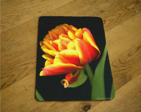 Parrot Tulip Photo Tempered Glass Cutting Board 8x11 and 12x15