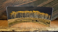 Aspen Glow Before Storm Photo Curved Metal  Desktop Pano Print