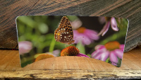 Butterfly on Pink Coneflowers Curved Metal  Desktop Pano Print