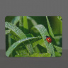 Lady Bug Photo on Tempered Glass Cutting Board 8x11 and 12x15
