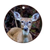 "Deer Chewing Talking  Ceramic Ornament With   Fine Art Photo by Koral Martin,  3"" Round"