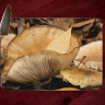 Mushrooms at Crystal Bridges Arkansas Photo on Tempered Glass Cutting Board 8x11 and 12x15