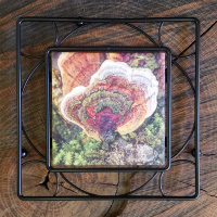 Colorful Moss and Tree Fungus Ceramic  Trivet  6x6 with Metal Trivet Holder